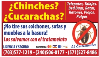 ¿Chinches? ¿Cucarachas?